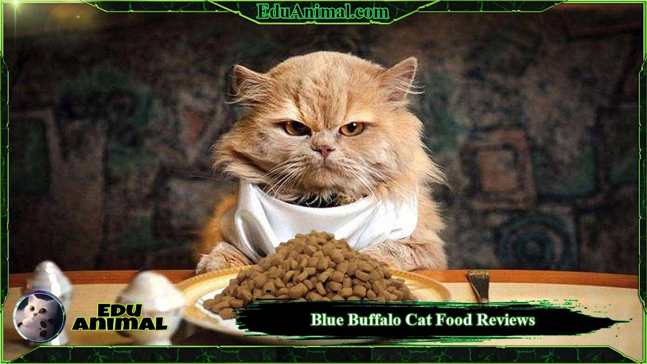 Blue Buffalo Cat Food Reviews: Is It Good Food For Cats? | EduAnimal