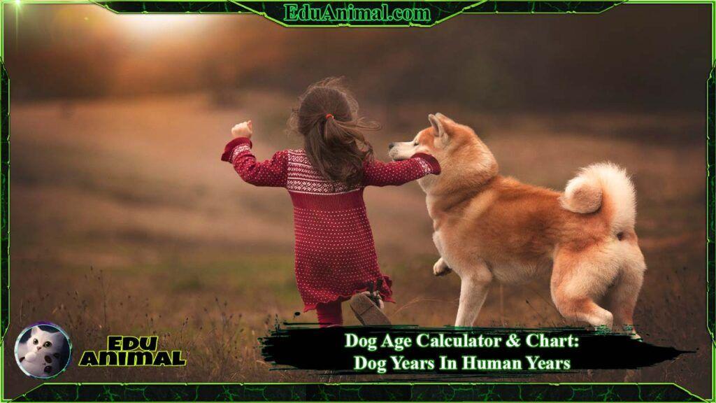 Dog Age Calculator & Chart: Dog Years To Human Years | EduAnimal